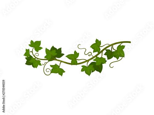 Fotografía  Green grapevine close-up