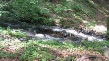 Small Mountain Stream In The Forest