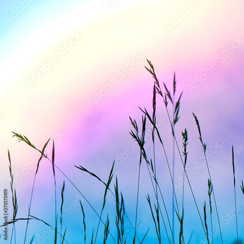 Printed kitchen splashbacks Purple flower plant and sky in the nature in summer, plant silhouettes