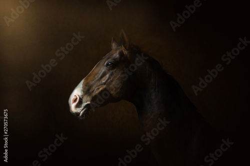 horse on dark background