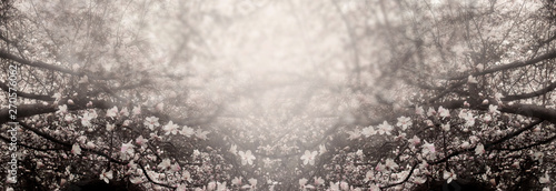 Fotobehang Magnolia Mysterious spring floral background with blooming magnolia flowers