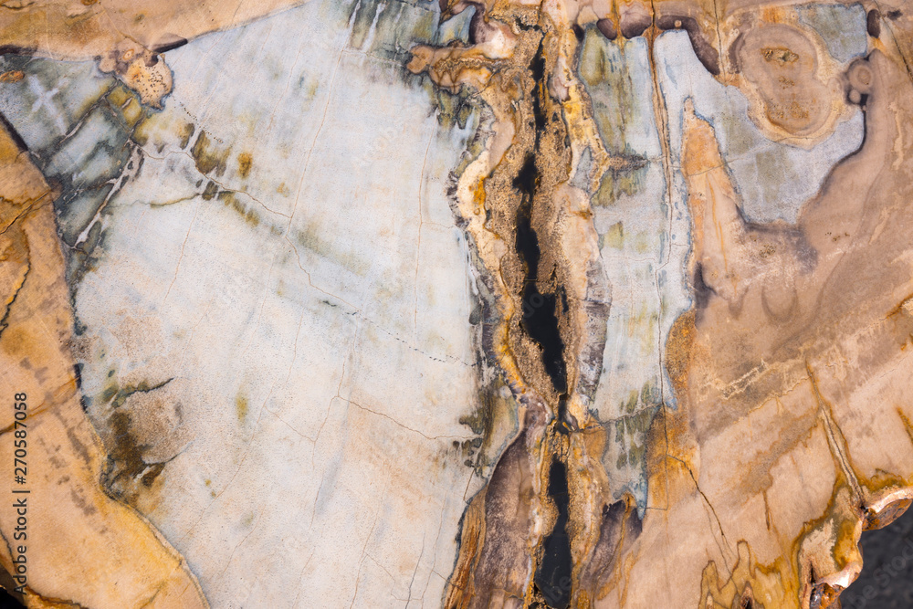 Fototapety, obrazy: petrified and polished fossil trees at bryce canyon