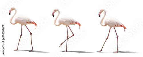In de dag Flamingo beautiful pink flamingo posing. isolated on white background