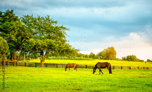 Two horses grazing on a farm in Central Kentucky Fotobehang