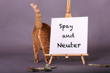 Spay And Neuter White Canvas S...