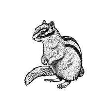 Hand Drawn Chipmunk. Vector Sk...