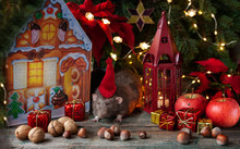 Cute Little Gray Rat, Mouse With Santa Claus Hat In New Year's Composition With Fir Tree Branches, Apples, Nuts And Gifts. Chinese New Year Symbol