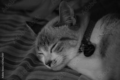 Photo  Sleeping Cat Leia