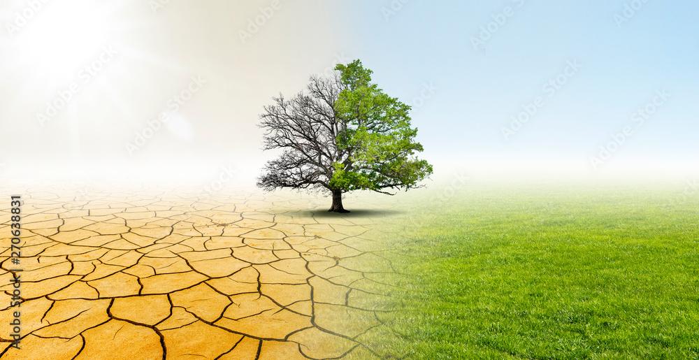 Fototapeta Baum in einer Landschaft mit Wüste und Wiese zeigt Verbesserung des Klimas