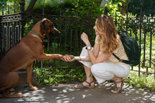 Woman Training Dog Command In ...