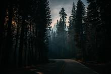 Morning Time In Spooky Coniferous Woods In Smoke