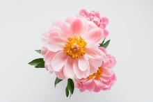 Top View Peony Flowers