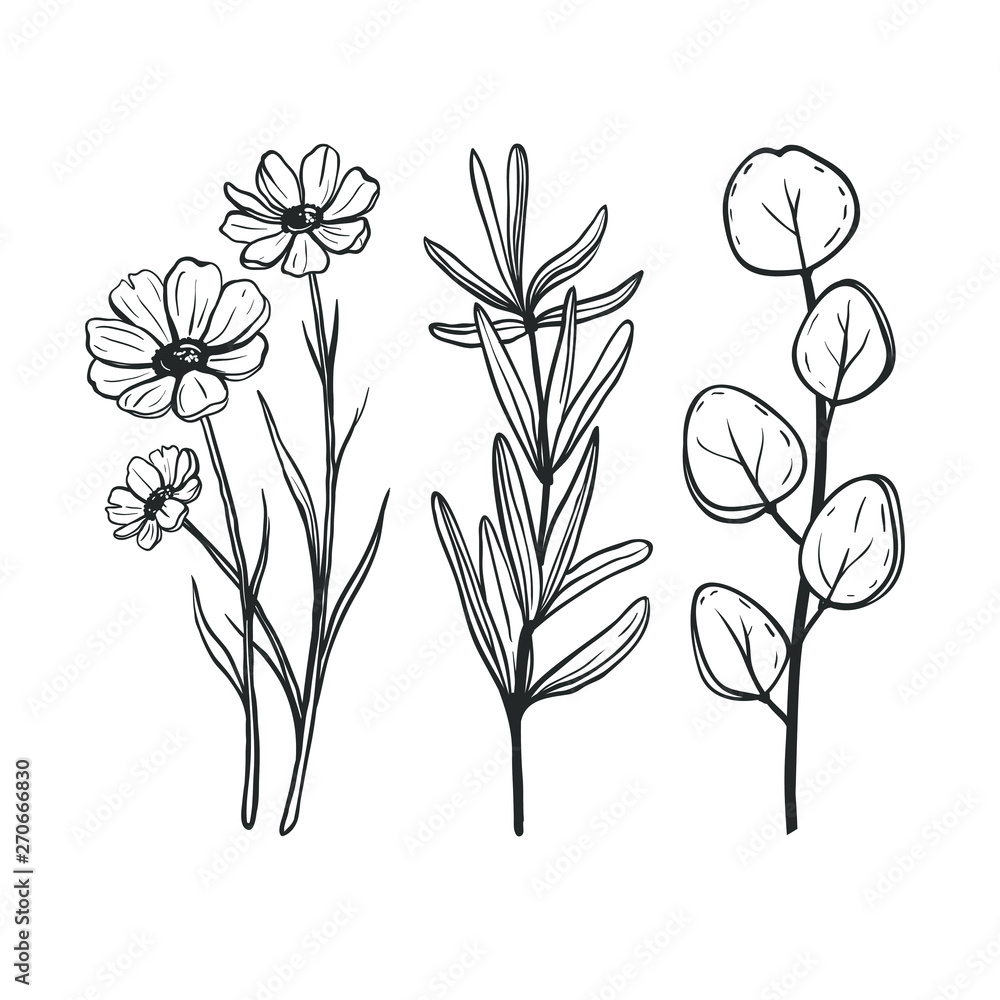 Fototapeta Set of hand sketched herbs and flowers. Botanical illustration for herbal medicine and aromatherapy. Vector floral illustration with flowers and leaves isolated on white.