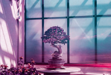 Colorful Bonsai Tree In Greenhouse At Sunset