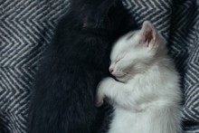 Cute Kittens Sleeping Hugged