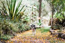 Working Dog Puppy Running Through Garden