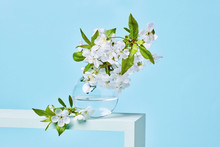 Blooming Cherry Branch In A Glass Transparent Jar, Standing On A