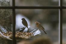 Desert Songbirds And Hummingbirds