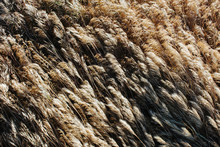 Close Up Of Grass Blowing In W...