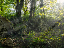 A Pile Of Large Stones In The Forest, Overgrown With Moss And Grass And Trees.