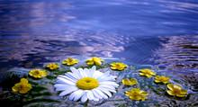 Flowers In Water, Midsummer Ni...