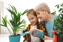 Little Girl And Her Grandmother Taking Care Of Plants Indoors
