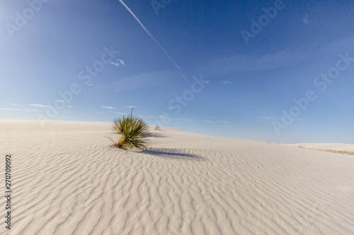 Fotografering Soap Tree Yucca In Desert Landscape