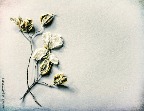 Valokuva  Gray Card with Dried White Dogwood Flower, leaves and stems on gray paper background with room or space for copy, text or your words