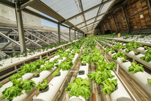 Urban Farming In The Rooftop O...