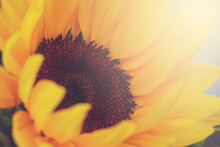 A Closeup Lifestyle Shot Of A Bouquet Of Flowers Featuring A Brilliant Sunflower
