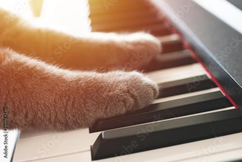 piano keys and playing piano - 270742452