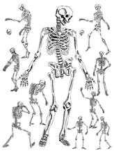 Hand Drawn Skeleton Vector Design Collection