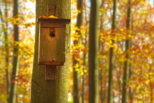 Birdhouse Hung On A Tree In A ...