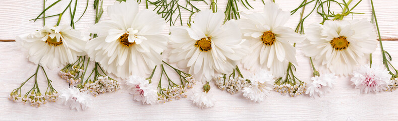 Fototapeta Vintage White cosmea cosmos flowers panoramic border, banner, wedding romantic background. Flat lay.