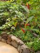 Vegetation im Palmitos Parque - Gran Canaria