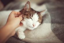 Woman Petting A Cat