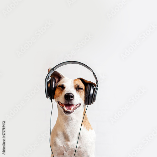 Dog in headphones listening to music - 270789442