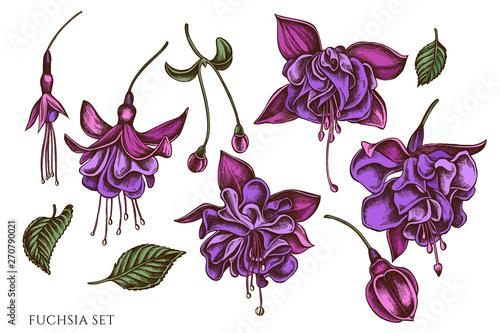 Fotografia, Obraz Vector set of hand drawn colored  fuchsia