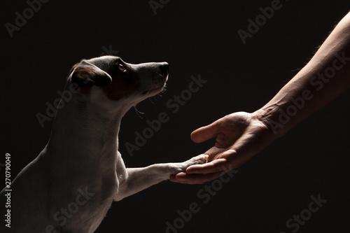 Łapa psa bierze mężczyznę