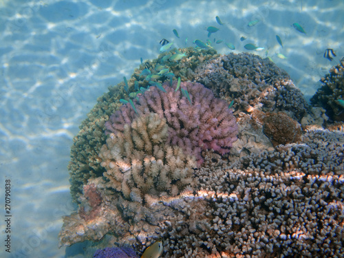 Underwater view of colorful tropical fish and coral reef in the Bora Bora lagoon, French Polynesia