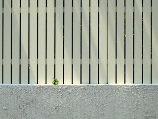 young bodhi tree growth on street wall with fence