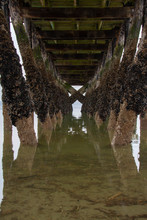 The Symmetry Of The Piling Under A Fishing Pier With Barnacles Encrusting The Piling.