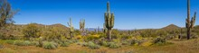 The Landscape Of The Sonoran D...