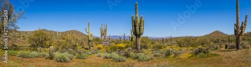 The landscape of the Sonoran Desert in full sunlight Fototapeta