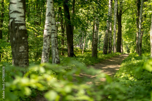 Photo sur Aluminium Route dans la forêt Russian nature. Path in the woods. Russian forest. Summer day in the forest.