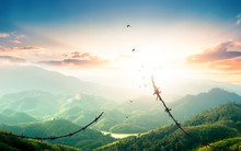 World Refugee Day Concept: Free Bird Flying Over Broken Barbed Wire