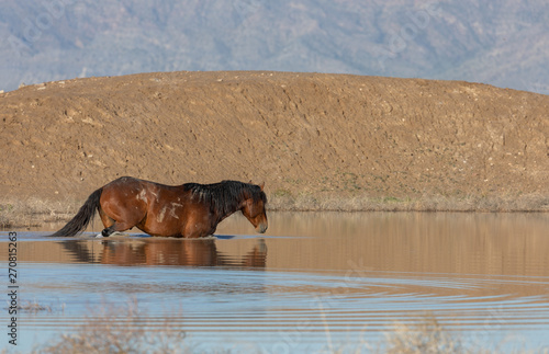 Wild Horse at a Waterhole in the Utah Desert