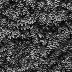 Fototapeta Inspiracje na wiosnę ivy plant cover on the wall black and white style