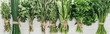 top view of various green herbs on white wooden table, panoramic shot