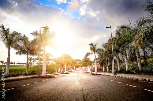 Summer background and coconuts palms Canvas Print